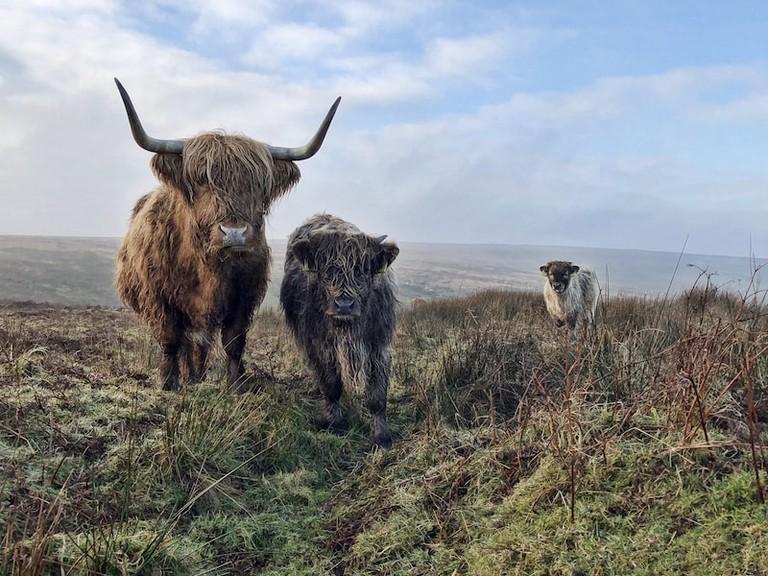 'Exmoor Beasts' by Paul Steven