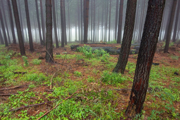 The misty forest floor in Hogsback