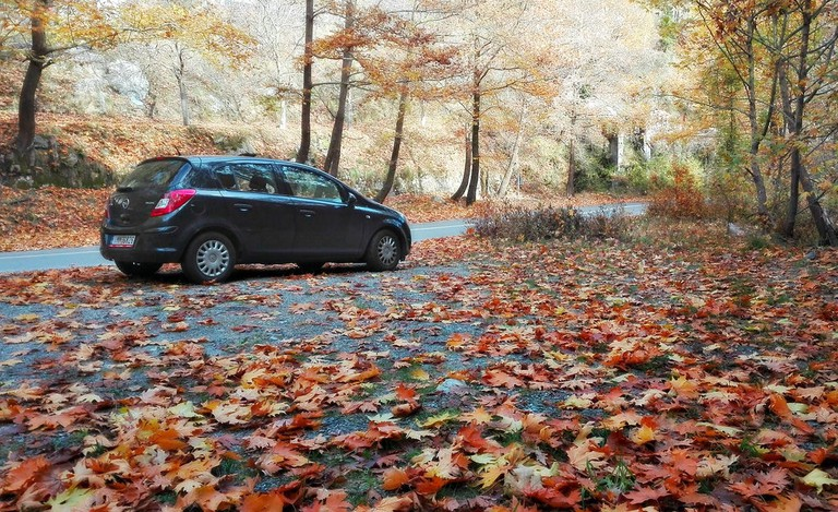 Surrounded by leaves, on a road in Mount Taygetos, Peloponnese
