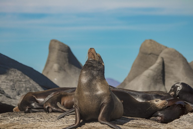 Nearby Coronado Island is home to a friendly sea lion colony