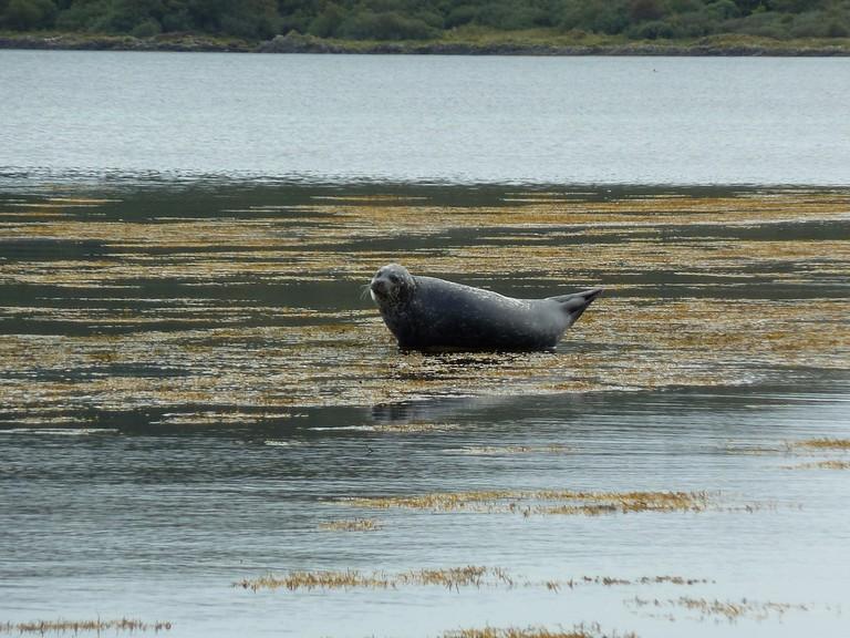 Jura Seal