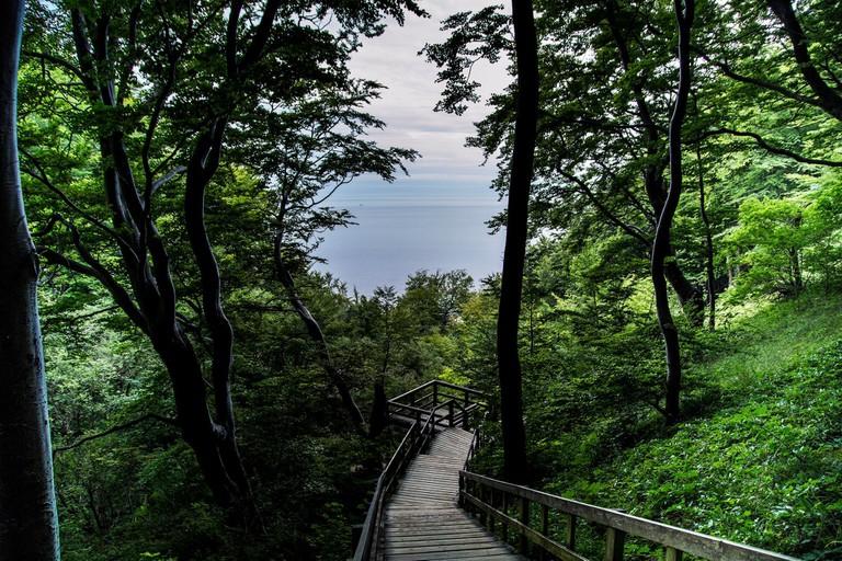Møns Klint moens cliffs Denmark forest