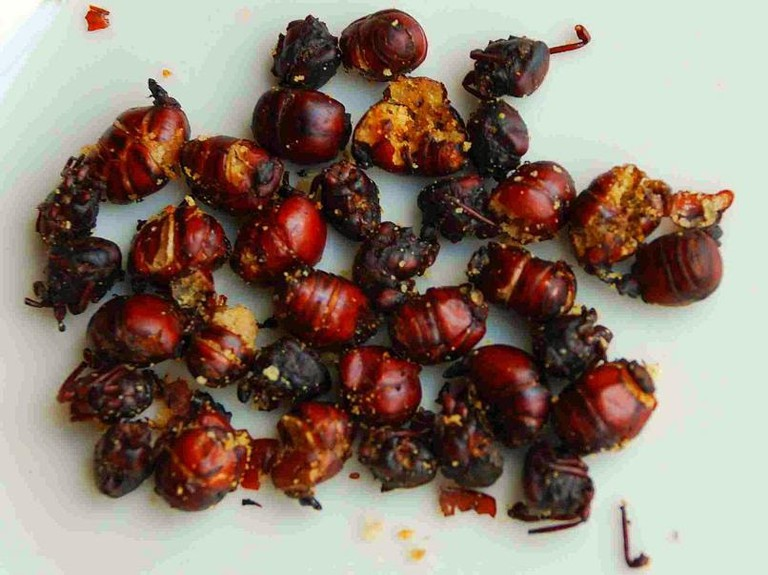Ants_For_Food_SG (1)