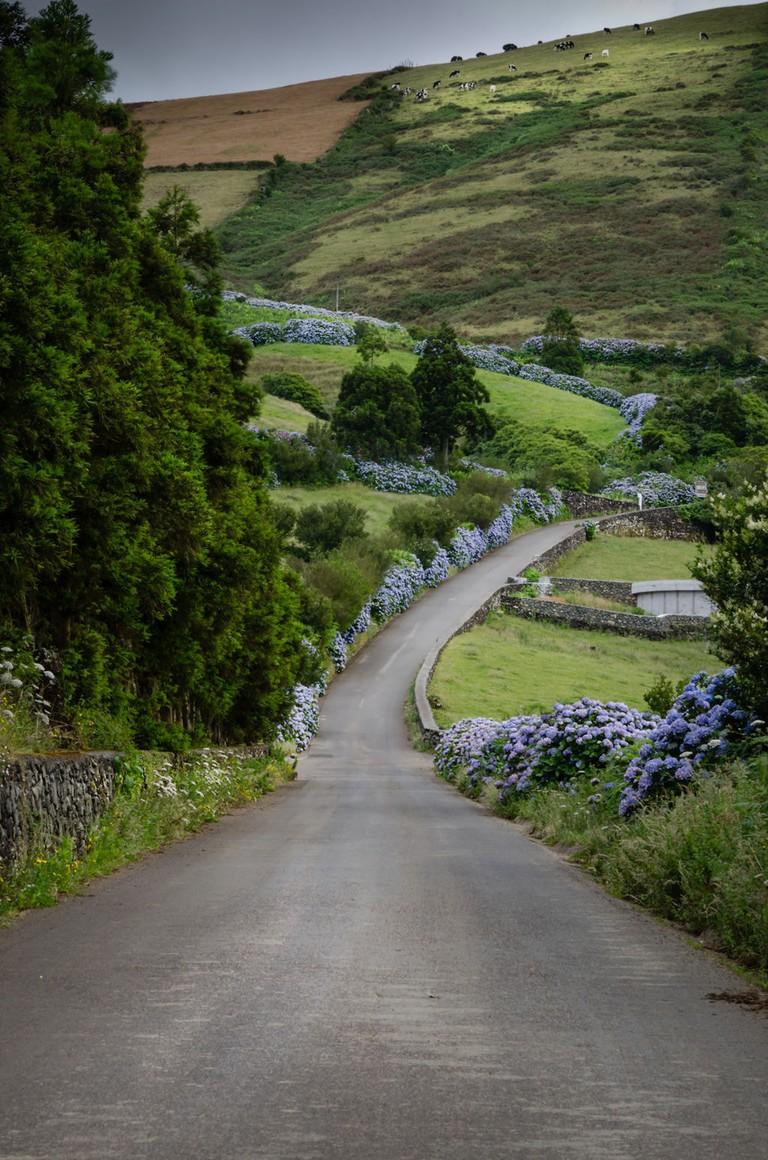 Caminho_Sinuoso_-_Ilha_Terceira