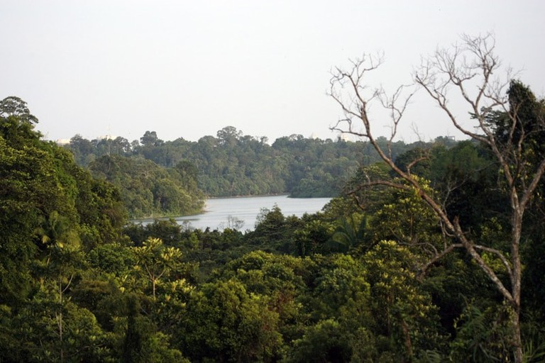 Central_catchment,_Singapore_-_Flickr_-_Lip_Kee