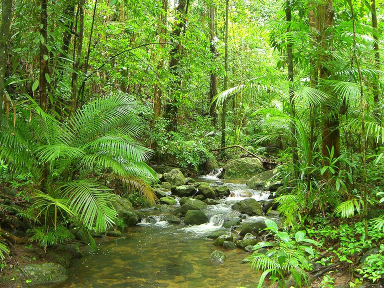 Daintree Rainforest © Master Man / Flickr