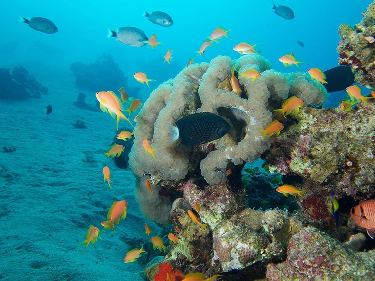 Diving in Aqaba, in the Red Sea