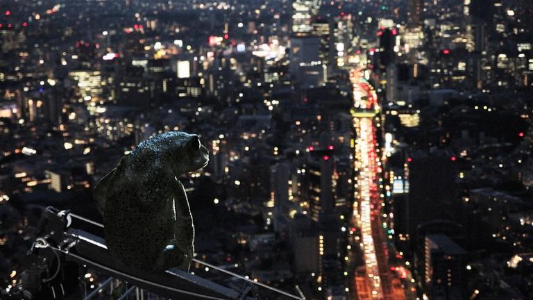 DreamingMurakami_IDFA_Still_1_Frog