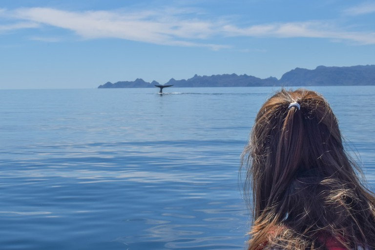 From January to April, you can spot blue whales in Loreto's National Marine Park
