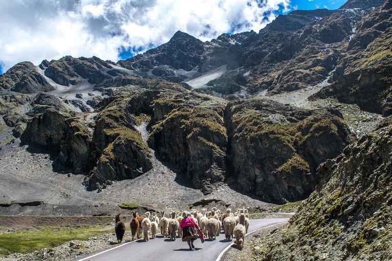 Lares is a popular alpaca herding ground