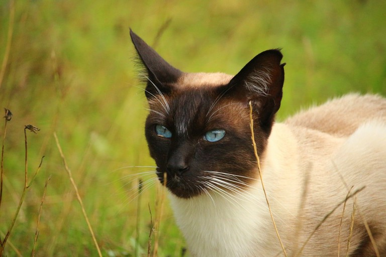 grass-cat-mammal-fauna-whiskers-snout-546693-pxhere.com