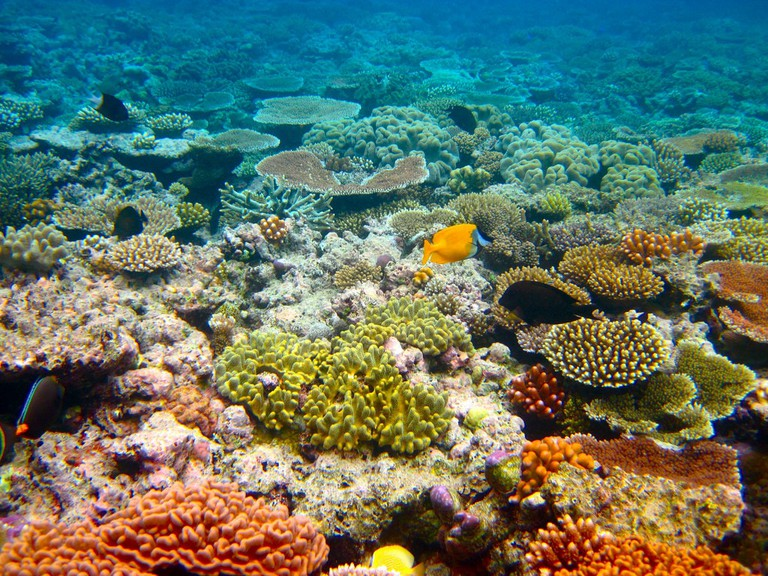 Great Barrier Reef © Kyle Taylor / Flickr