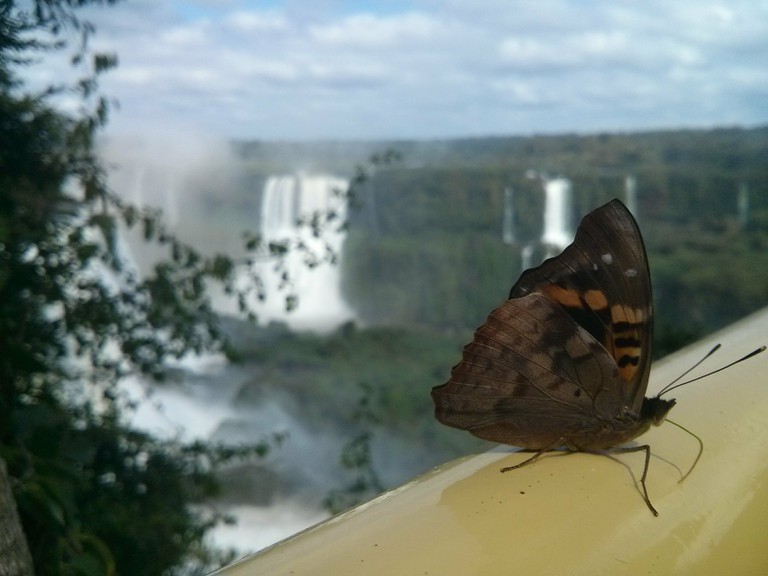 The living Iguazu