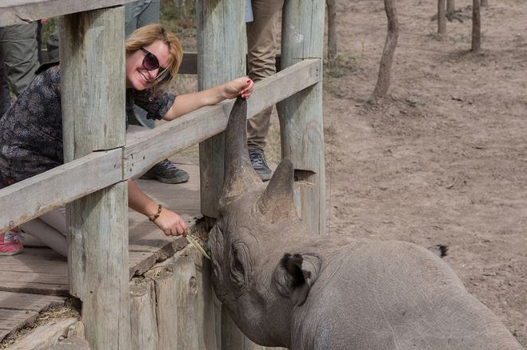 An interactions with a black rhino at Ol Pejeta