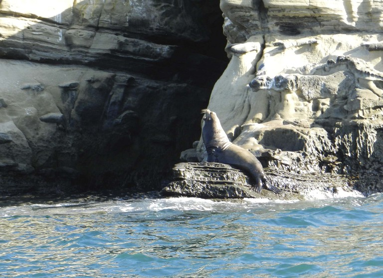 Sea lions and seals are a common, albeit smelly, sight.