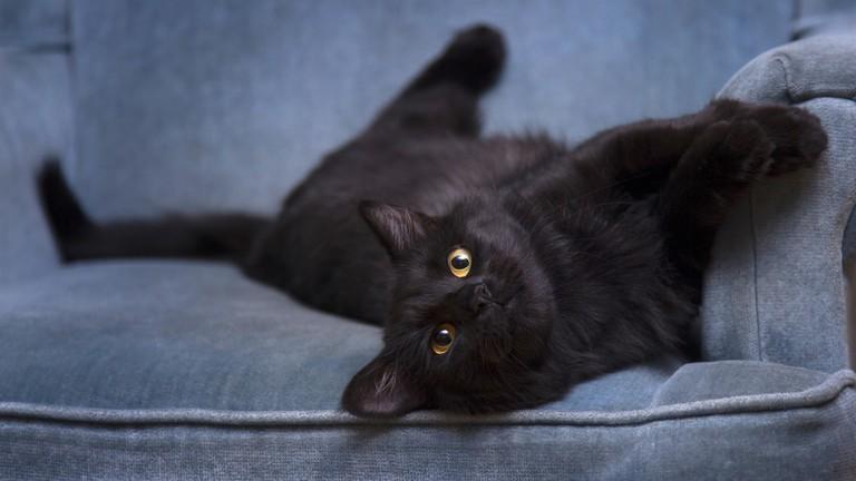 kitten-cat-feline-mammal-black-cat-black-394186-pxhere.com