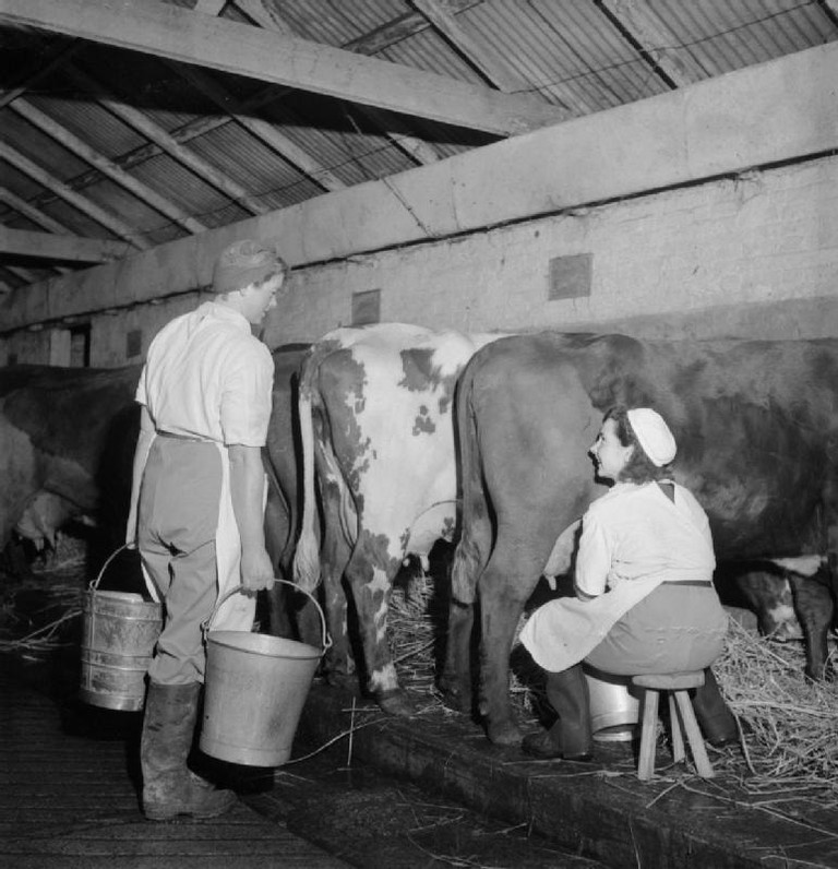 Milking-stool-throwing is a throw back to old rural living