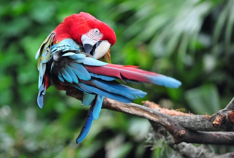 Macaw 8.44.00 AM