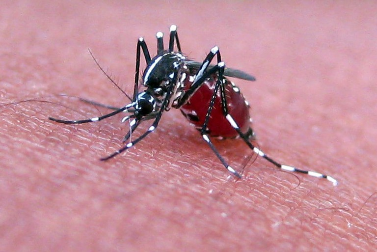 The mosquito-squashing contest gets rid of some annoying pests