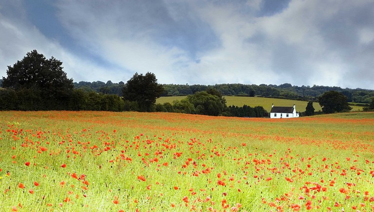 Poppy field in Wombourne