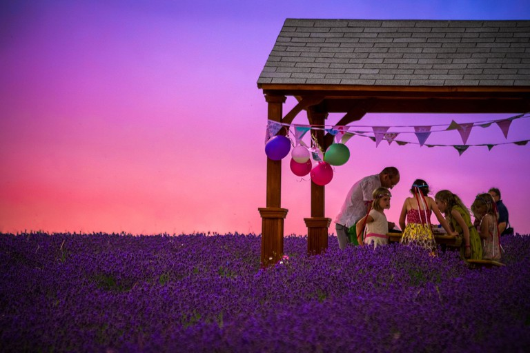 Private party at Mayfield Lavender | © Mayfield Lavender