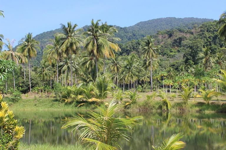 rain-forest-273780_1280