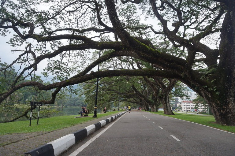 Centuries-old trees in Taiping Lake Gardens