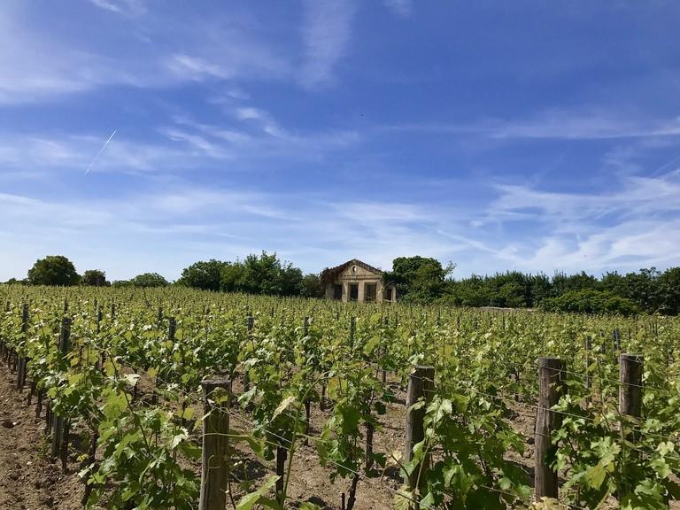 The French wine harvest |© Public domain / Pixabay