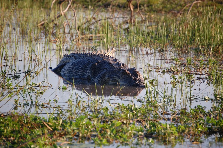 Saltwater crocodile in Arnhem Land © Jon Connell / Flickr