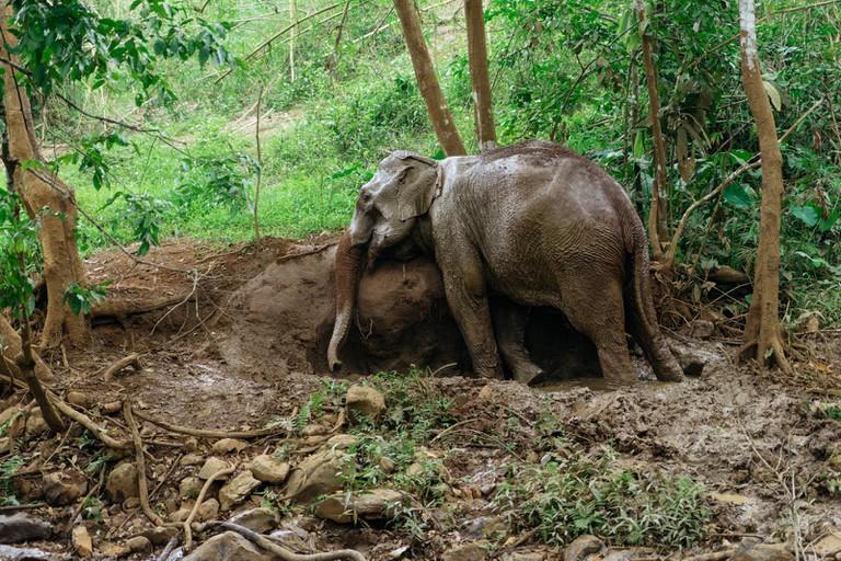 ELEPHANT SANCTUARY-MONDULKIRI-CAMBODIA