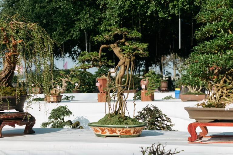 BONSAI-ART-HUE-VIETNAM