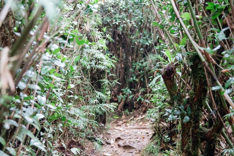 Knuckles Mountain Range-Sri Lanka