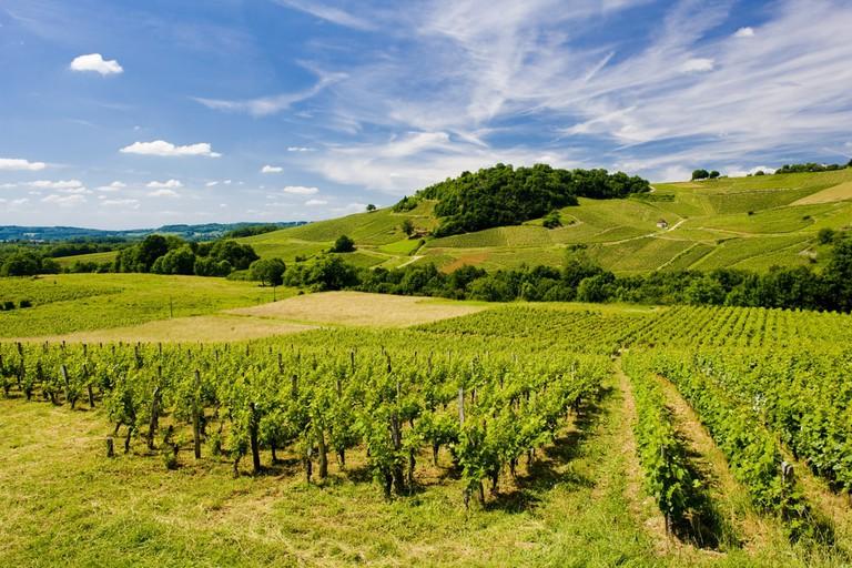 Vineyards Near Chateau Chalon, Departement Jura, Franche-Comte, France |© PHB.cz (Richard Semik) / Shutterstock