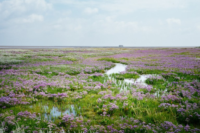 Meadow, Borkum, Germany