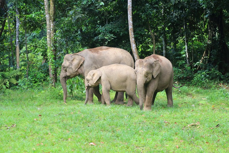 You can see Pygmy elephants at the Lok Kawi Wildlife Park