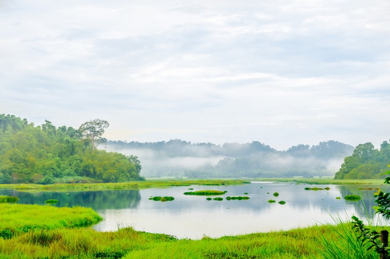 Crocodile lake in the jungle of cat Tien national park, Vietnam