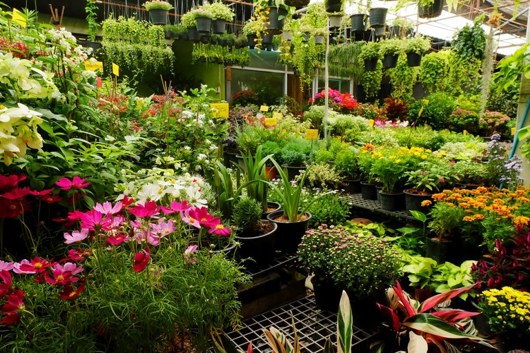 There's over a dozen plant stores on Plant Street