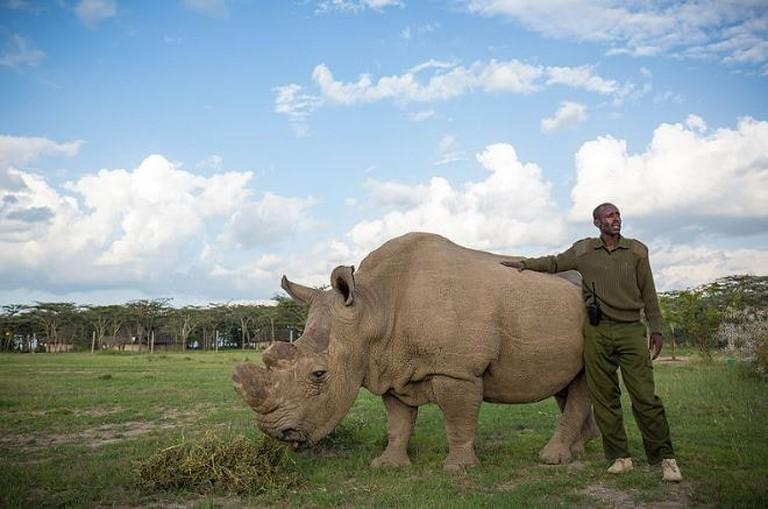 Sudan The last male white rhino in the world