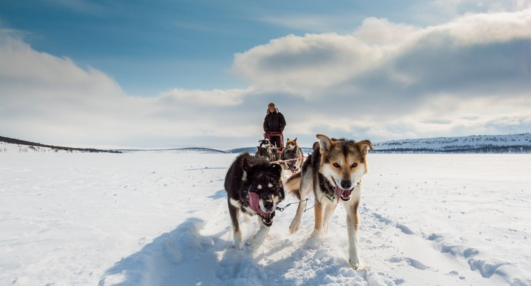 The dogs at Holmen Husky Lodge will steal your heart, Courtesy of Holmen Husky Lodge