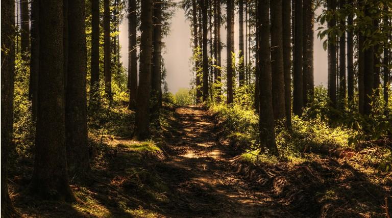 trees-3410846_1920