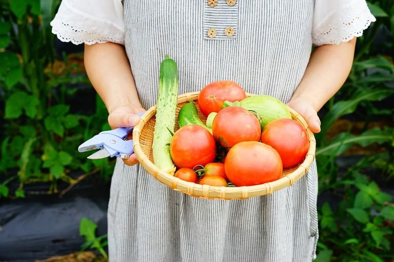 vegetable-garden-1981336_1280