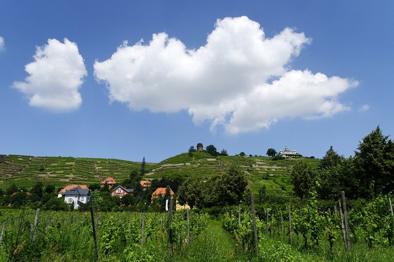 Rolling vineyards of Radebeul