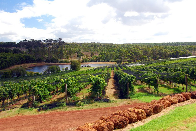 Margaret River vineyard © Robert Young / Flickr