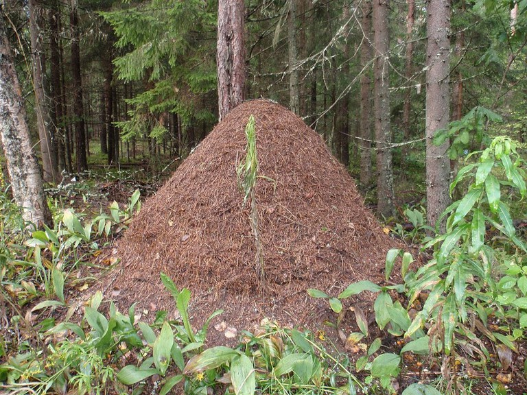 Would you dare to sit on an ant nest?