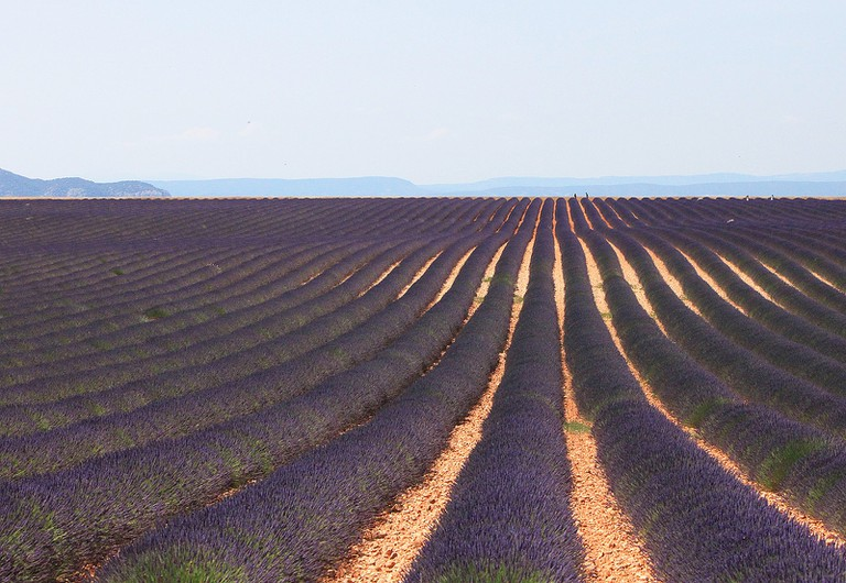 The lavender fields of Provence are a treat for all the senses