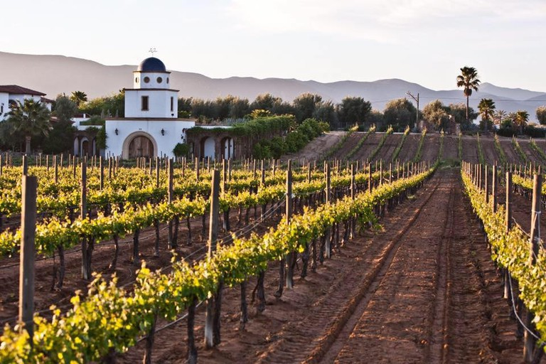 Sleep on a working vineyard at Adobe Guadalupe