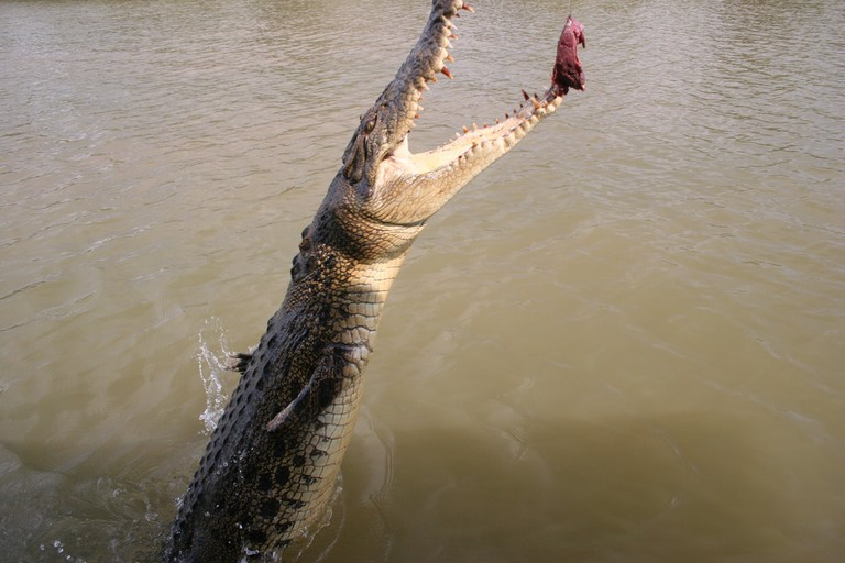 A jumping crocodile on the Adelaide River