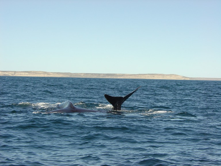 Whales are often seen in the southern city of Puerto Madryn