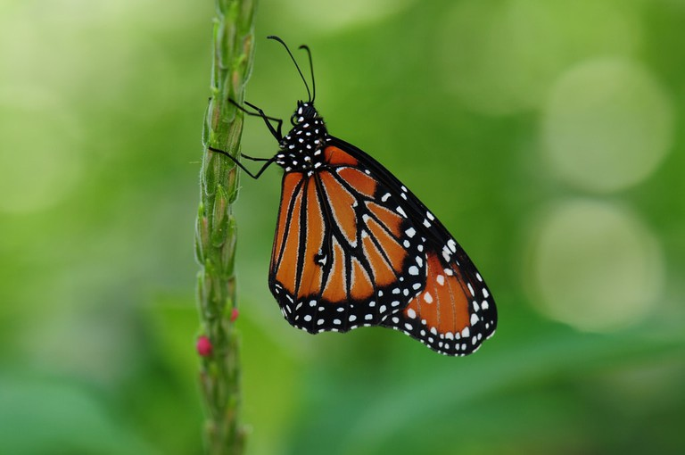 Texas Discovery Gardens are known for their amazing Butterfly House