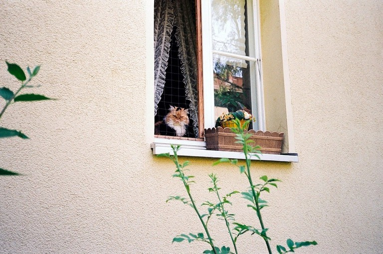 A cat looks out from a small window | © Ama Split and Riky Kiwy